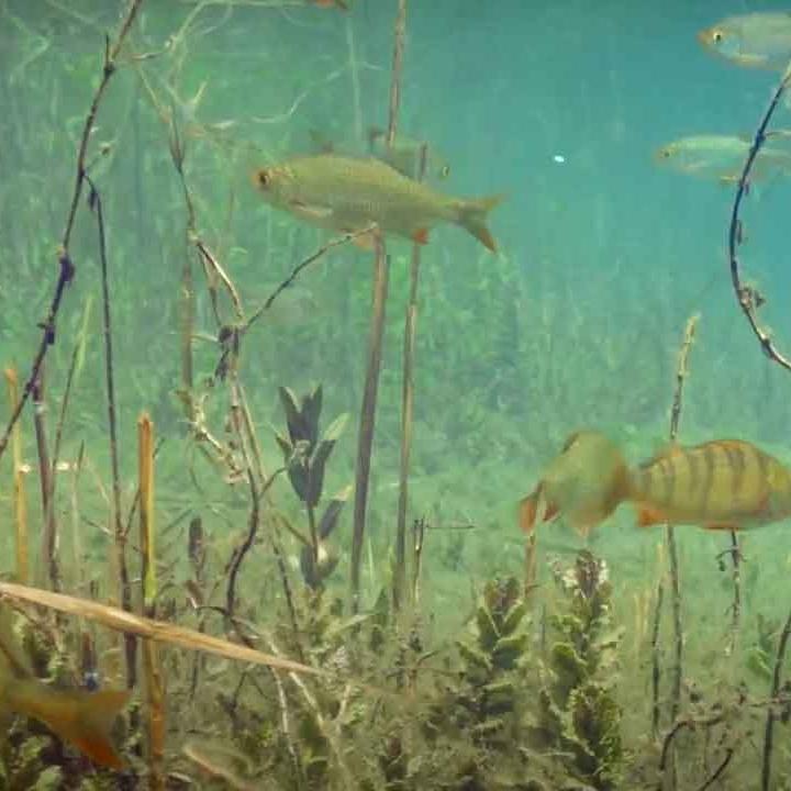 Vue sub-aquatique du plateau des 1000 étangs